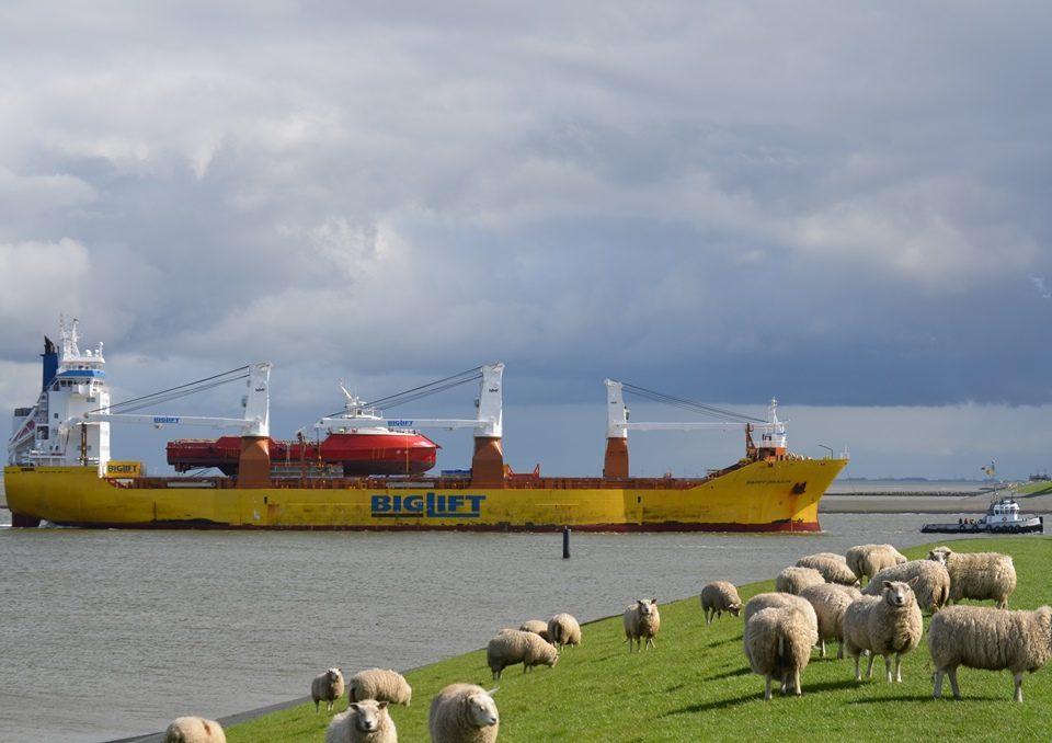 Onder toeziend oog van een kudde schapen vaart de Happy Dragon met aan boord het offshore vaartuig Siem Carajas de Eemshaven binnen (foto Mariska Burema / www.eemshavenonline.nl)
